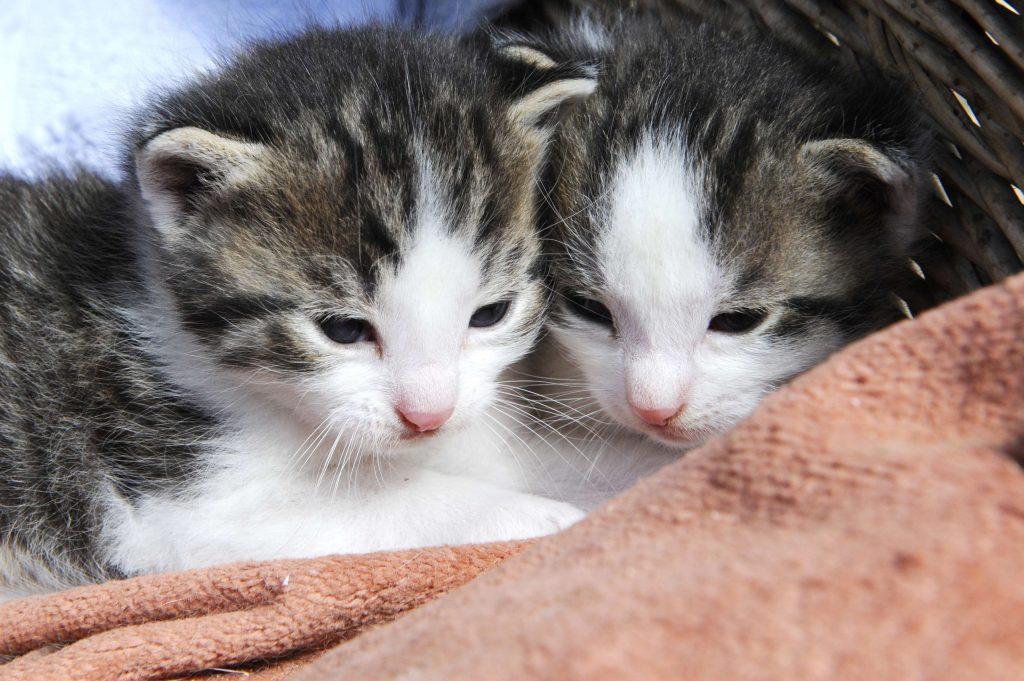 Schwäbische Alb mit Kindern: Babykatzen